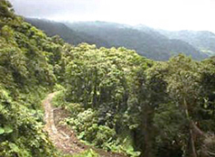 Monteverde Rainforest, Costa Rica