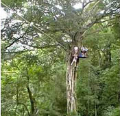 The Original Canopy Tour in Costa Rica