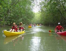 Mangrove / Damas Island Kayaking Tour