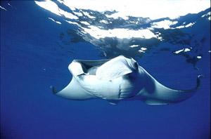 Montezuma Scuba Diving Tour